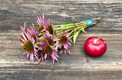 Medical herbs echinacea flowers bunch and red apple Royalty Free Stock Photo