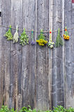 Medical herbs flowers bunch collection on old wooden wall. Fresh medical herbs flowers bunch collection on old wooden farm barn wall royalty free stock photography