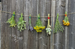 Medical herbs flowers bunch collection on wooden wall. Medical herbs flowers bunch collection on old wooden wall stock images