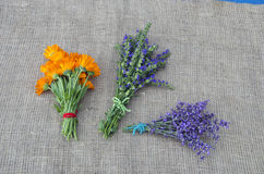 Medical herbs marigold, lavender and hyssop bunch. On linen cloth royalty free stock photos