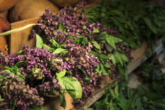 Medical herbs. Pile of herbs used to prepare tea Royalty Free Stock Photo