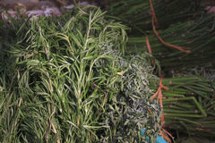 Medical herbs. Pile of herbs used to prepare medical teas Stock Photography