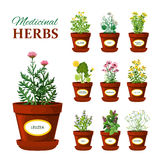 Medical Herbs In Pots With Labels Royalty Free Stock Photo
