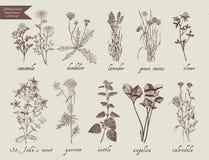 Medical herbs set. Hand drawn design. Stock Photos