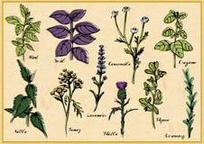 Medical herbs set Royalty Free Stock Image