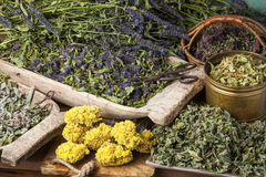 Medical herbs. Various dried medical herbs: mint, tilia flowers, anise hyssop, helichrysum arenarium royalty free stock image