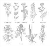 Medical Herbs Vector Set. royalty free illustration