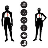Medical Human body part icon. Human male and female body outline with icons of various human body parts Stock Image