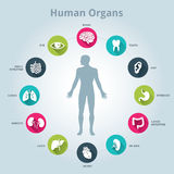 Medical human organs icon set with body in the middle stock photo