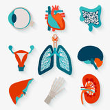 Medical icons of internal human organs Royalty Free Stock Photo