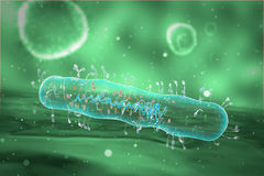 Medical illustration of the Bacteria Stock Photography