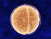 Medical Illustration of Cell Dividing. Image of cell dividing in two within a clear cell membrane, against blue-stained background. Horizontal format Royalty Free Stock Image