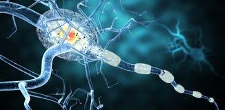 Medical illustration, nerve cells. Stock Images