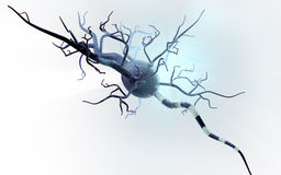 Medical illustration, nerve cells  Stock Photo