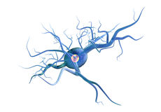 Medical illustration, nerve cells isolated Royalty Free Stock Image