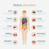 Medical infographic Stock Image