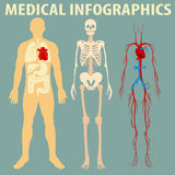 Medical infographic of human body Royalty Free Stock Image
