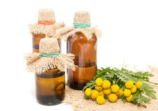 Medical infusion of tansy Stock Images