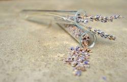 Medical lavender Stock Photos