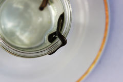 Medical leech Hirudo medicinalis on a white plate. Royalty Free Stock Photography