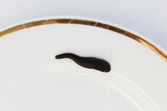Medical leech Hirudo medicinalis on a white plate. Stock Images