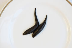 Medical leech Hirudo medicinalis on a white plate. Stock Image