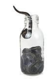 Medical leeches in a glass bottle Royalty Free Stock Images