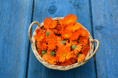 Medical marigold calendula flowers in basket on blue  old  table Stock Images
