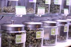 Medical marijuana. In large jars at a legal marijuana dispensary royalty free stock image