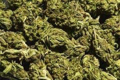 Medical Marijuana Background Stock Image