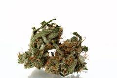 Medical marijuana bud on white background Royalty Free Stock Photo