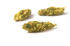Medical marijuana buds Royalty Free Stock Photography