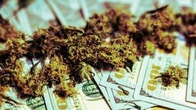 Medical marijuana buds lying on money, close-up. Growing cannabis indoor. Organic stock photography