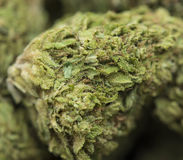 Medical marijuana closeup Royalty Free Stock Images