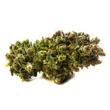 Medical Marijuana 2. Freshly harvested medical marijuana bud royalty free stock photography