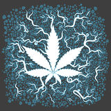 Medical marijuana growing leaf background Stock Photos