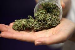 Medical marijuana in the hand of a doctor. cannabis alternative medicine royalty free stock photos