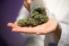 Medical marijuana in the hand of a doctor. cannabis alternative medicine royalty free stock photo
