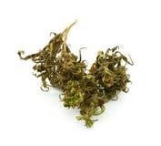 Medical marijuana isolated on white background. Royalty Free Stock Images