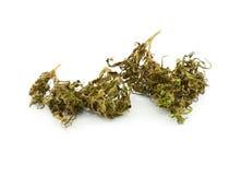 Medical marijuana isolated on white background. Royalty Free Stock Photography