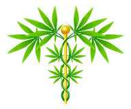Medical Marijuana Plant Caduceus Royalty Free Stock Image