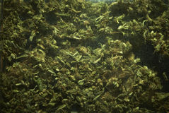 Medical Marijuana RX Royalty Free Stock Photos
