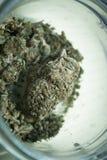 Medical Marijuana Royalty Free Stock Image