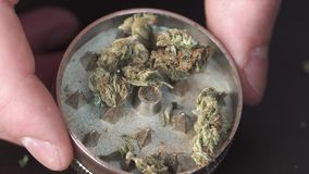 Medical marijuana on the table. Man`s hand puts marijuana in a Herb grinder for grinding