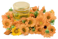 Medical oil from a calendula Stock Images