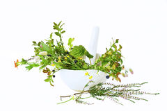 Free Medical Plants Royalty Free Stock Images - 7569809