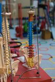 Medical Plastic Scale Model of Human Spine with Colorful Signs for Teaching.  stock photography