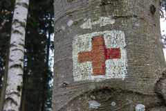 Medical Red Cross Emergency Symbol Painted on Tree Trunk Forest. Park Royalty Free Stock Photography