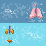 Medical Research Internal Human Organs Banners Stock Photography
