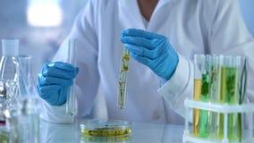 Medical scientist preparing new herbal medication, plant qualities lab testing stock images